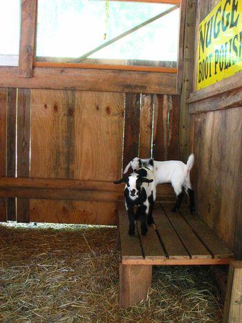 Goat House Tour Mayaland