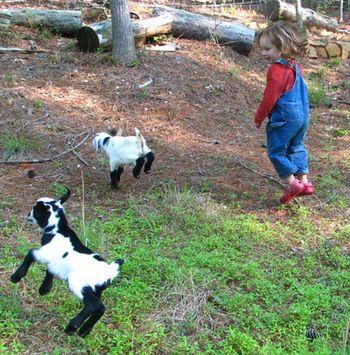 jumping goats