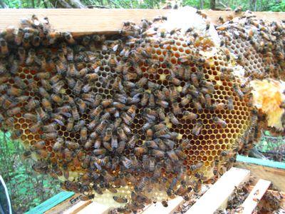 hive-check-1.jpg