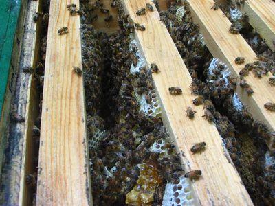 hive-check-4.jpg