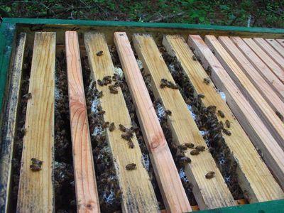 hive-check-5.jpg
