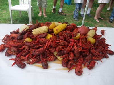 Displaying (19) Gallery Images For Crayfish Vs Crawfish...
