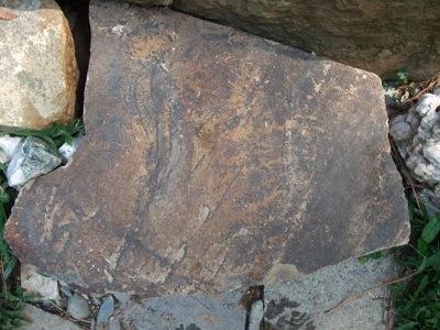 fossil 1.jpg