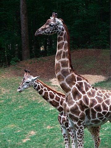 zoo 9.jpg