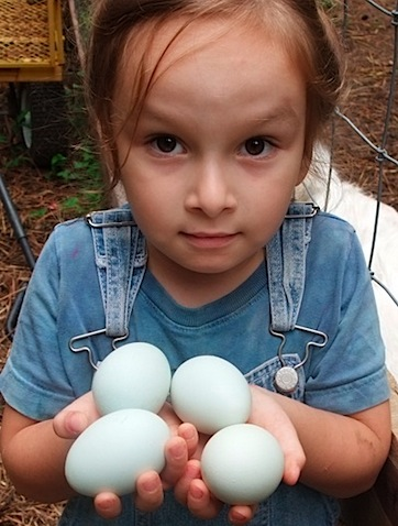gathering eggs 1.jpg