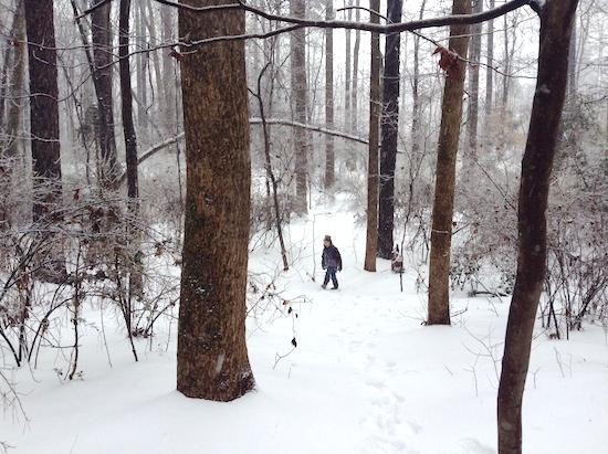 snow storm 6