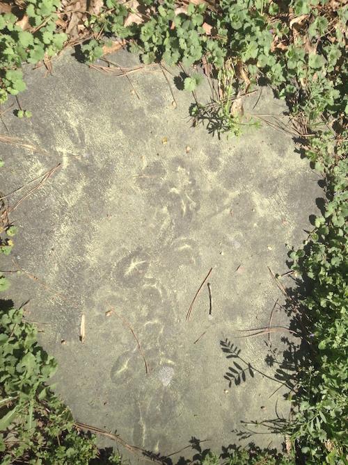 pollen footprint